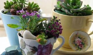 cicek saksi bitki ot evde